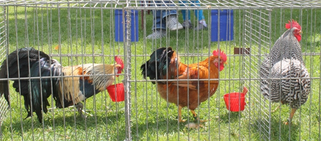 Ausbruch Vogelgrippe in NRW