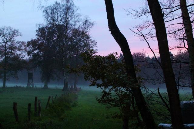 Nebelschwaden im Dämmerwald