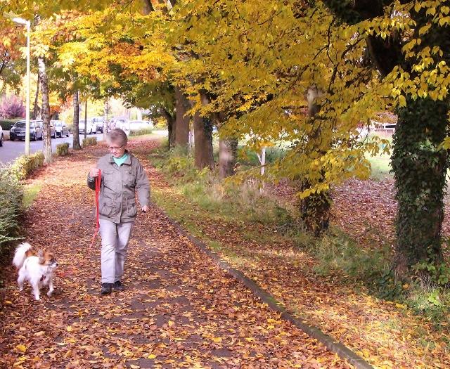 Herbstspaziergang Schermbeck