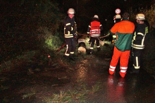 Feuerwehr Schermbeck Sturmschaden Baum