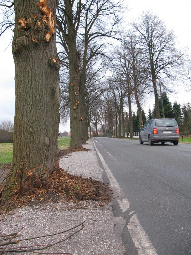 Der helel Streifen links neben der weißen linie sollte von Radfahrern genutzt wreden. Zwischen den bäumen ging das auch halbwegs. Aber in Höhe der Bäume musste man immer einen Schlenker auf die Kirchstarße kmachen. Wer einen radfharer dabei beobachtete, musste annehemn, der Radler sei betrunken. Foto: Helmut Scheffler, 12. Januar 2008
