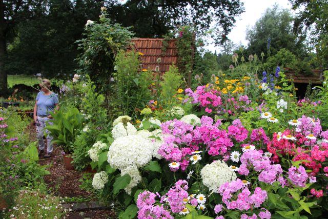 Sommerblumen Garten Paus-Foto Petra Bosse