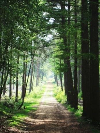 Lichtung im Wald uefter Mark
