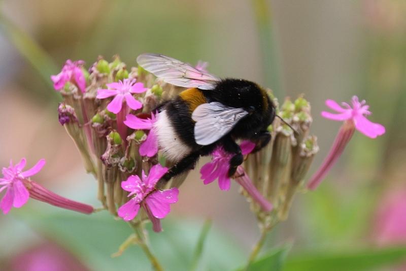 Insektensterben Kreis Wesel Schermbeck