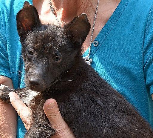Verwahrloste Fundhunde aus Schermbeck 2018 im Tierheim Wesel