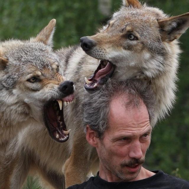 Joe de Bruin und seine Wölfe