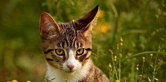 freilaufende katze