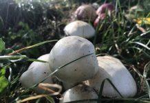 Pilze im Herbst Naturpark Hohe Mark