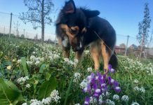 Hundespielwiese für Hunde in Schermbeck