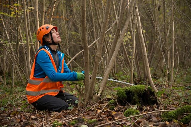 Ehrenamtliche im Einsatz für einen stabilen Wald: Das Bergwaldprojekt im Naturpark Hohe Mark