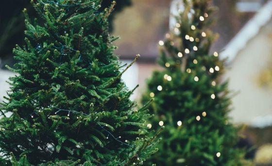 Weihnachtsbäume vom Niederrhein