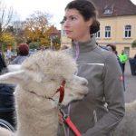 ZDF und Wolf lockte Interessierte nach Schermbeck