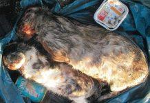 tote katzen im Altkleidercontainer gefunden
