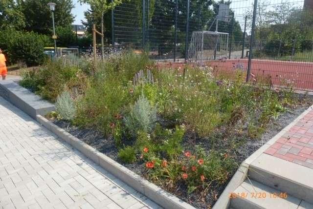 Blühende Bepflanzung in Schermbeck anstatt Schotterbeete