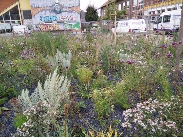 Keine Schotterbepflanzung in Schermbeck