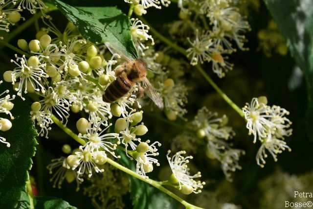 Blühpflanzen für die Umwelt