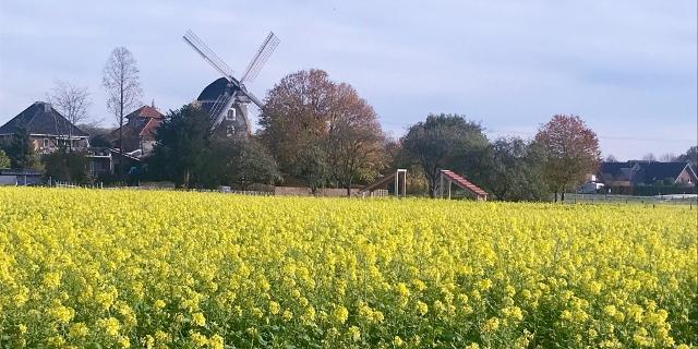 Erler Mühle