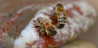 Insektentränke
