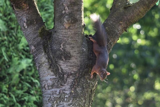Eichörnchen gegen EPS