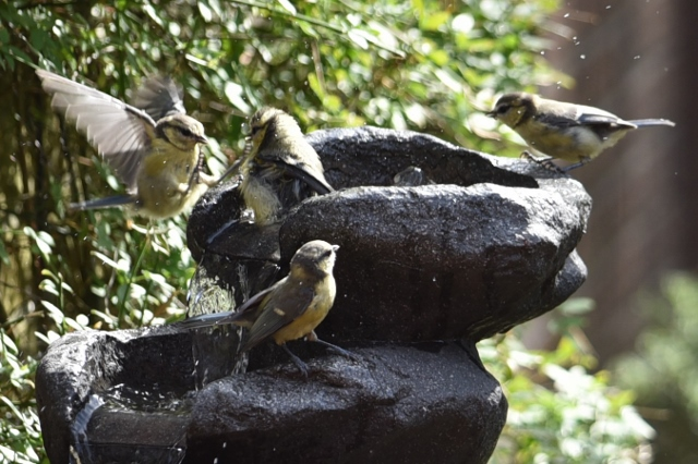 Kampf gegen EPS-Vogeltränke