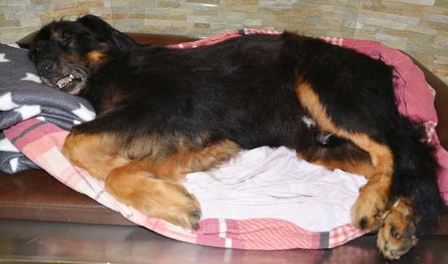 Einäscherung Hund in Wesel