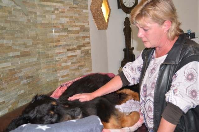 Einäscherung Krematorium Hund