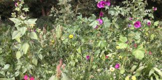 Blühwiesen Schermbeck