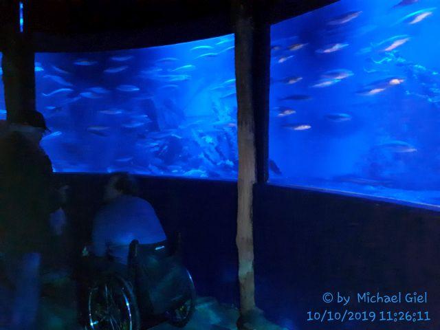 Sea Life oberhausen mit dem Vdk Schermbeck