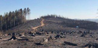 Waldbrand in Gummersbach