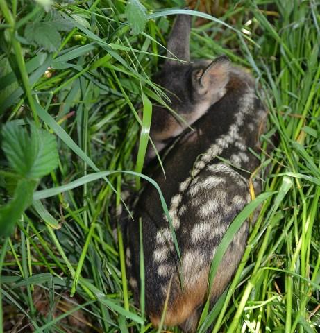 Wildes Schermbeck im Naturpark Hohe Mark