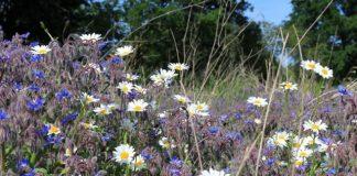 Blumenwiese NRW Landwirtschaft