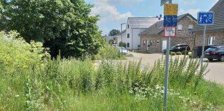 Borgskamp-Schermbeck