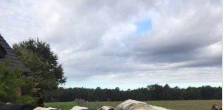 Kühe brechen nach Wolfsangriff in gahlen von der Weide ausJ
