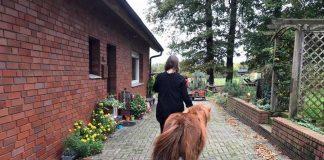 Schermbecker-Wölfe-rissen-Pony-in-Kirchhellen