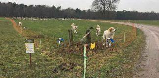 Herdenschutzhunde-Gahlen