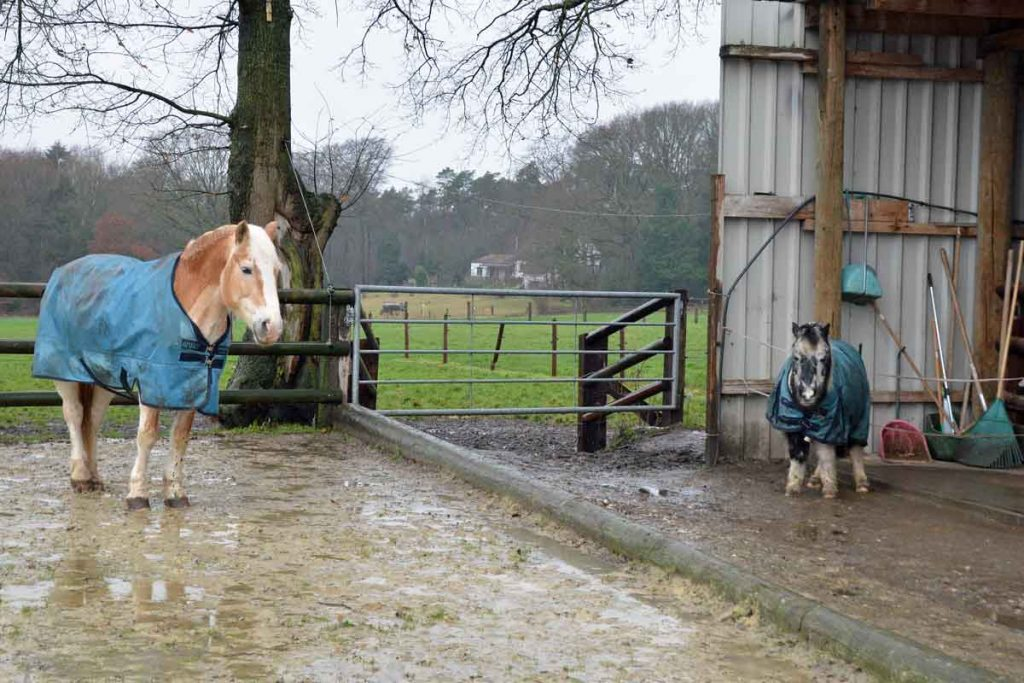 Pony-Reiterhof-Ressing-Huenxe-