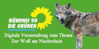 Thema Wolf Grüne Kreis Wesel