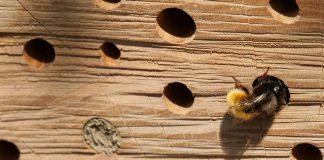 Wildbienenhotel Gahlen