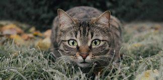 verwilderte-Katzen