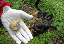Giftköder-Schermbeck-Gifthunde-Carmen-Höchst-im-Einsatz