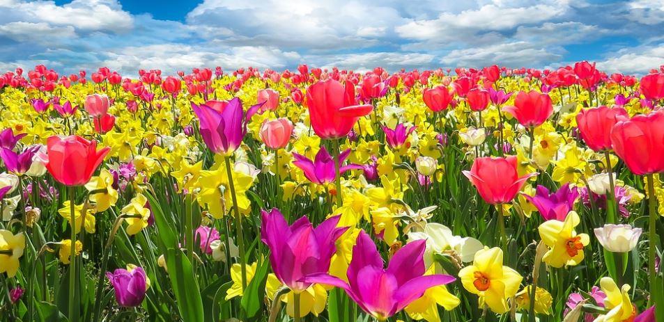 Bricht blüht im Frühling